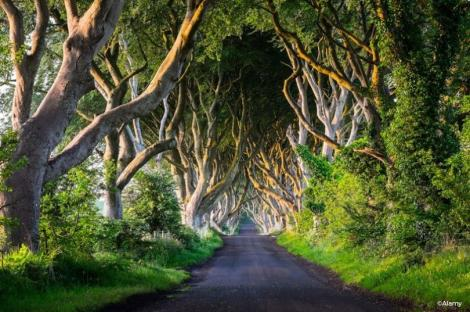 La Route Royale - Dark Hedges, Irlande du Nord