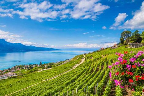 The Swiss wine route